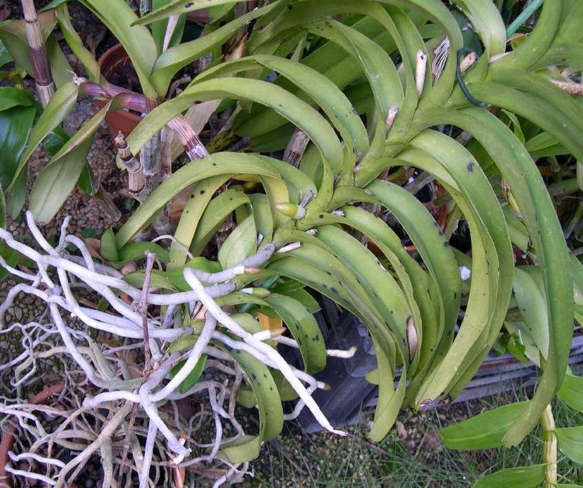orchidee a l'exterieur